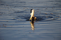 The Cormorant and the Snook, 6