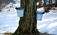 Maple sugar buckets