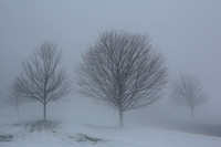 Trees in snow fog - Hadley