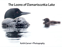 The Loons of Damariscotta Lake