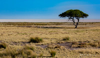 Etosha plain punctuated by a single acacia tree