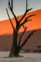 An very old tree at Deadvlei