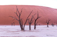 Old trees at Deadvlei before the sunlight