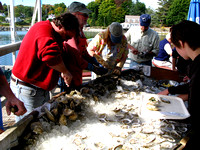 Shucking oysters at the Pemaquid Oyster Festival