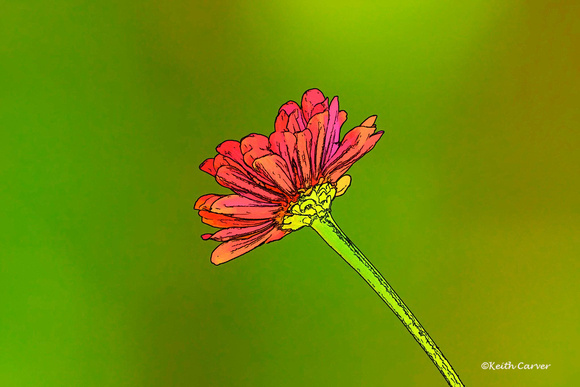 Zinnia cartoon