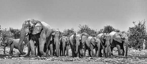 Elephant family leaving an Etosha waterhole