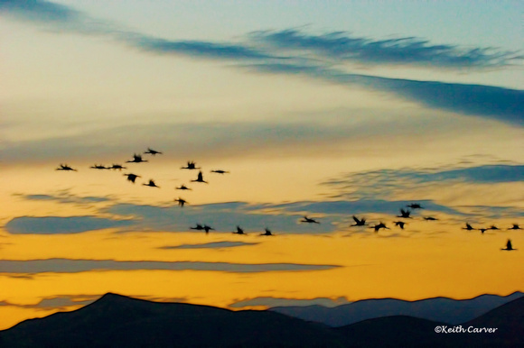 Sunset Crane Flight