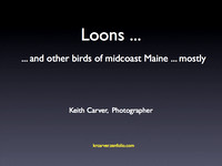 slide show:  Loons and other birds of midcoast Maine 2008