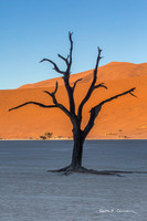 An ancient tree reaches for the light at Deadvlei