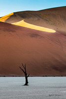 "A lone tree at Deadvlei with the ""Big Daddy"" dune in the background"